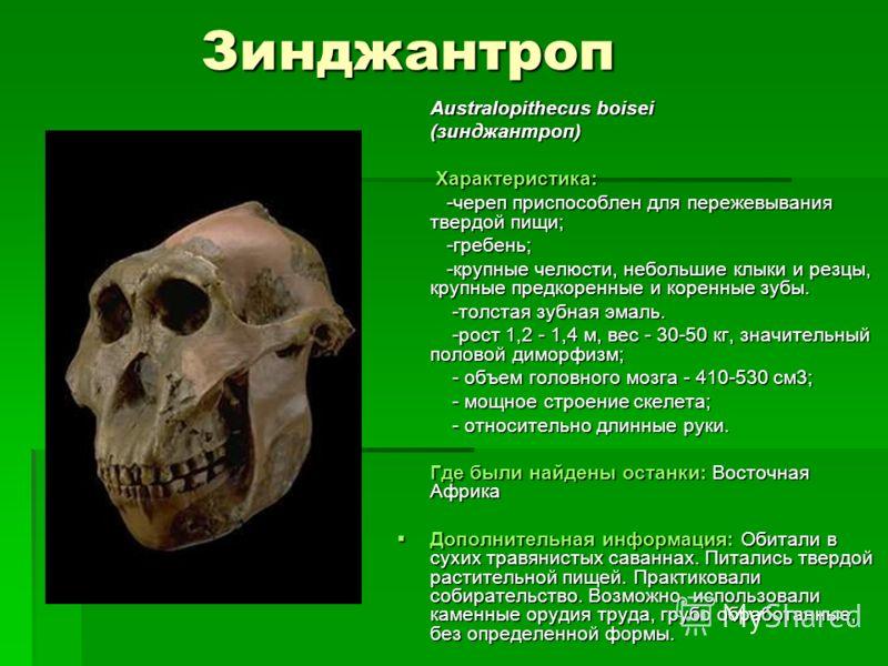 Зинджантроп Australopithecus boisei Australopithecus boisei (зинджантроп) (зинджантроп) Характеристика: Характеристика: -череп приспособлен для пережевывания твердой пищи; -череп приспособлен для пережевывания твердой пищи; -гребень; -гребень; -крупн
