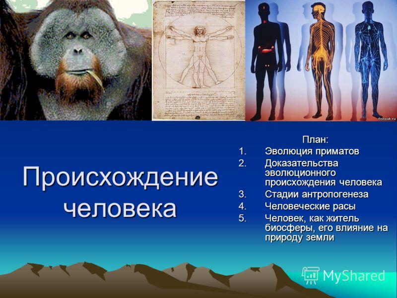 Происхождение человека План: 1.Эволюция приматов 2.Доказательства эволюционного происхождения человека 3.Стадии антропогенеза 4.Человеческие расы 5.Человек, как житель биосферы, его влияние на природу земли