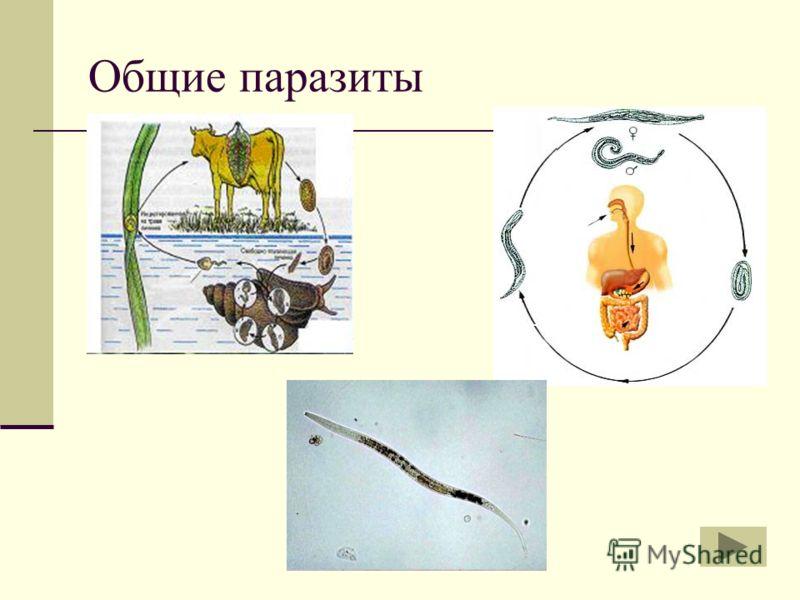 Общие паразиты