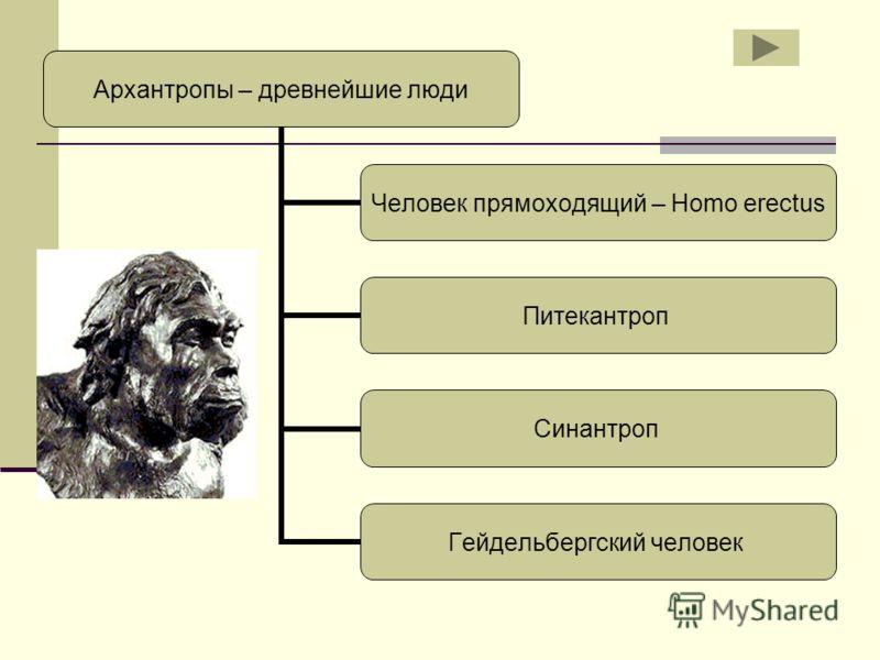Архантропы – древнейшие люди Человек прямоходящий – Homo erectus Питекантроп Синантроп Гейдельбергский человек