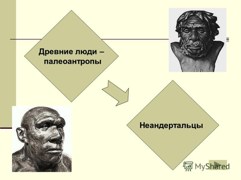 Древние люди – палеоантропы Неандертальцы