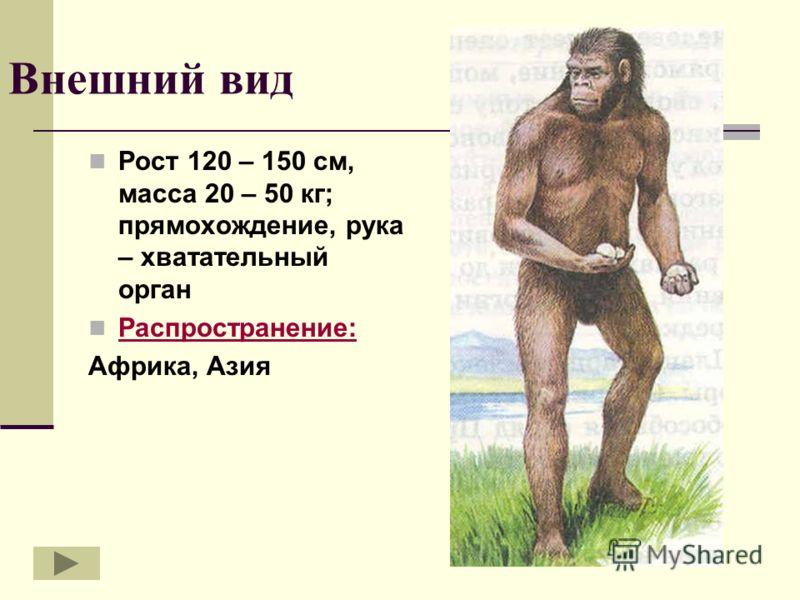 Внешний вид Рост 120 – 150 см, масса 20 – 50 кг; прямохождение, рука – хватательный орган Распространение: Африка, Азия