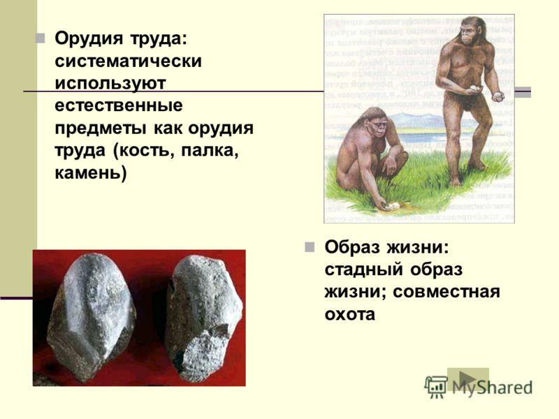 Орудия труда: систематически используют естественные предметы как орудия труда (кость, палка, камень) Образ жизни: стадный образ жизни; совместная охота