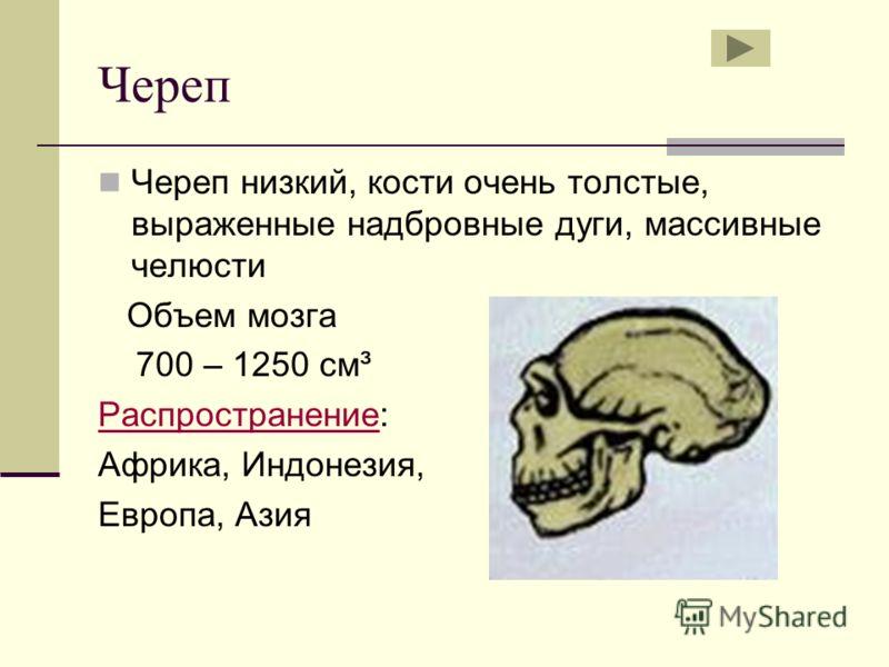 Череп Череп низкий, кости очень толстые, выраженные надбровные дуги, массивные челюсти Объем мозга 700 – 1250 см³ РаспространениеРаспространение: Африка, Индонезия, Европа, Азия