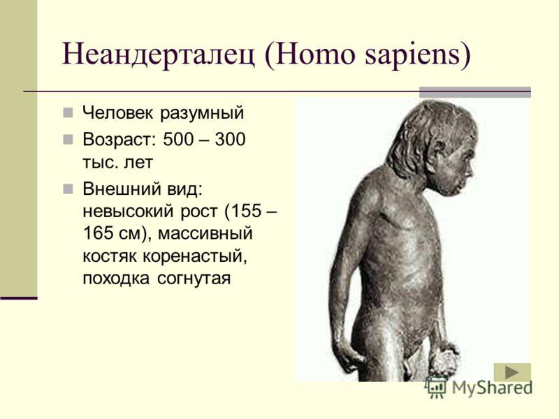 Неандерталец (Homo sapiens) Человек разумный Возраст: 500 – 300 тыс. лет Внешний вид: невысокий рост (155 – 165 см), массивный костяк коренастый, походка согнутая