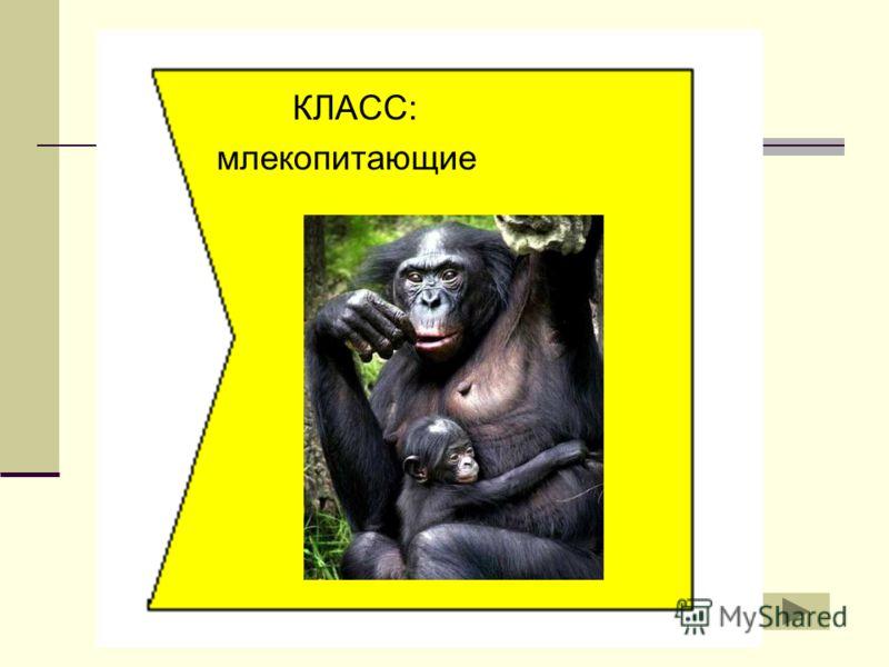 КЛАСС: млекопитающие