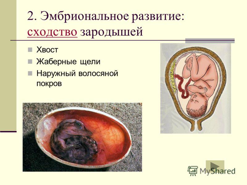 сода паразиты человека видео
