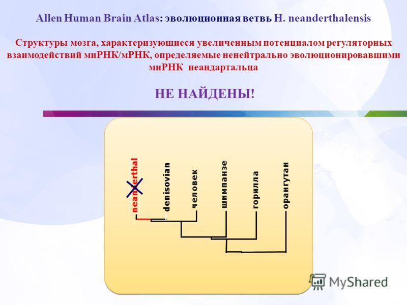 Структуры мозга, характеризующиеся увеличенным потенциалом регуляторных взаимодействий миРНК/мРНК, определяемые ненейтрально эволюционировавшими миРНК неандартальца НЕ НАЙДЕНЫ! человек шимпанзе горилла орангутан denisovian neanderthal Allen Human Bra