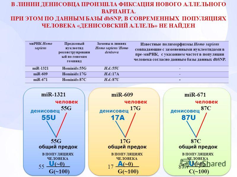 миРНК Homo sapiens Предковый нуклеотид реконструированн ый по геномам гоминид Замены в линиях Homo sapiens/ Homo denisova Известные полиморфизмы Homo sapiens совпадающие с замененными нуклеотидами в пре-миРНК, с указанием частот в популяции человека