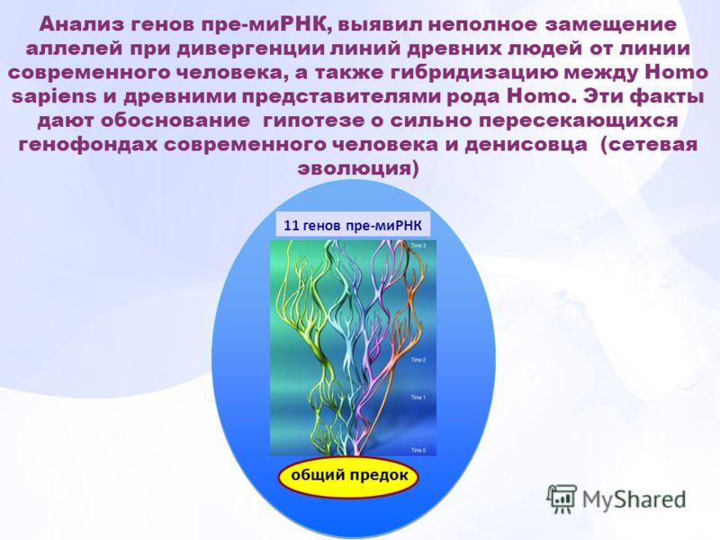 11 генов пре-миРНК общий предок Анализ генов пре-миРНК, выявил неполное замещение аллелей при дивергенции линий древних людей от линии современного человека, а также гибридизацию между Ноmo sapiens и древними представителями рода Ноmo. Эти факты дают