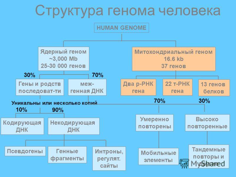HUMAN GENOME Гены и родств последоват-ти меж- генная ДНК Ядерный геном ~3,000 Mb 25-30 000 генов Митохондриальный геном 16.6 kb 37 генов Кодирующая ДНК Некодирующая ДНК Умеренно повторены Высоко повторенные Псевдогены Генные фрагменты Интроны, регуля
