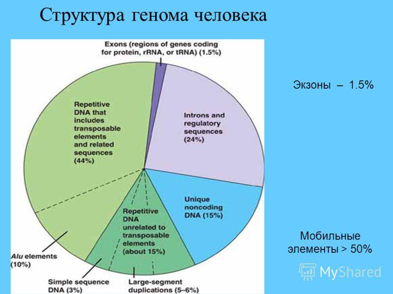 Мобильные элементы > 50% Экзоны – 1.5%