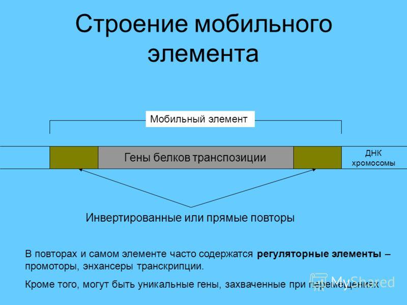 Строение мобильного элемента Гены белков транспозиции ДНК хромосомы Инвертированные или прямые повторы Мобильный элемент В повторах и самом элементе часто содержатся регуляторные элементы – промоторы, энхансеры транскрипции. Кроме того, могут быть ун