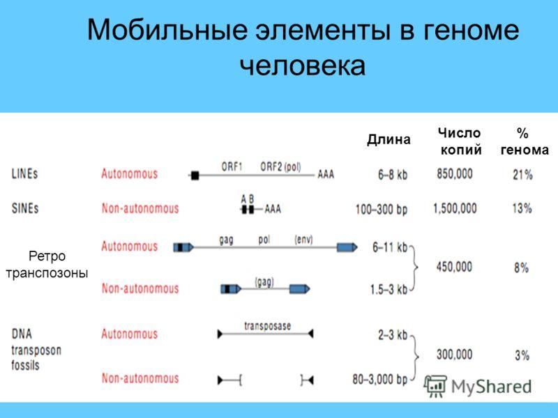 Мобильные элементы в геноме человека % генома Длина Число копий Ретро транспозоны