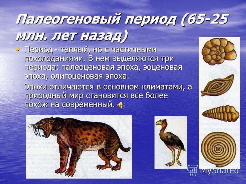 Кайнозойская эра (началась 65 млн. лет назад и до сейчас) Выделяют три главных периодов: Палеогеновый (65-25 млн. лет назад), Неогеновый, Антропогеновый.