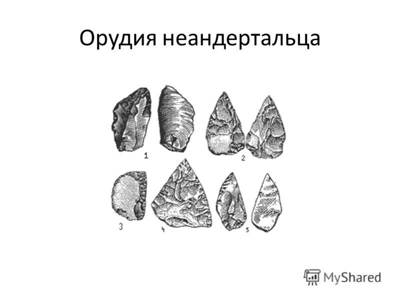 Орудия неандертальца