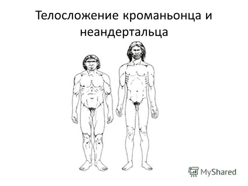 Телосложение кроманьонца и неандертальца