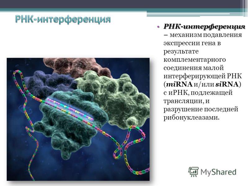 РНК-интерференцияРНК-интерференция – механизм подавления экспрессии гена в результате комплементарного соединения малой интерферирующей РНК (miRNA и/или siRNA) с иРНК, подлежащей трансляции, и разрушение последней рибонуклеазами.