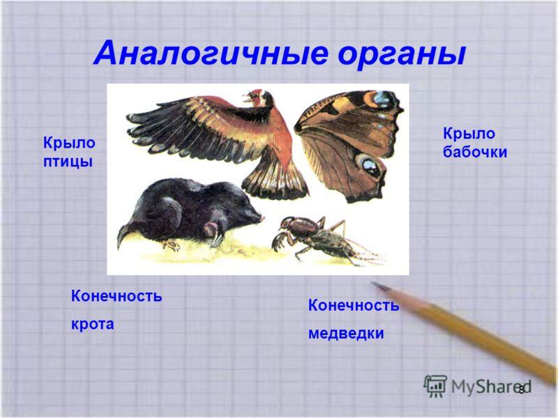 Аналогичные органы Крыло бабочки Крыло птицы Конечность медведки Конечность крота 8