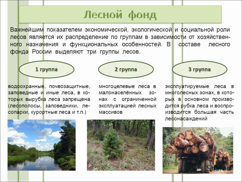 Важнейшим показателем экономической, экологической и социальной роли лесов является их распределение по группам в зависимости от хозяйствен- ного назначения и функциональных особенностей. В составе лесного фонда России выделяют три группы лесов. 1 гр