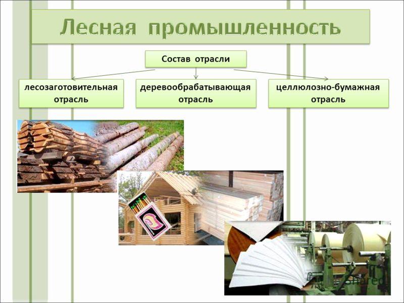 Состав отрасли деревообрабатывающая отрасль лесозаготовительная отрасль целлюлозно-бумажная отрасль