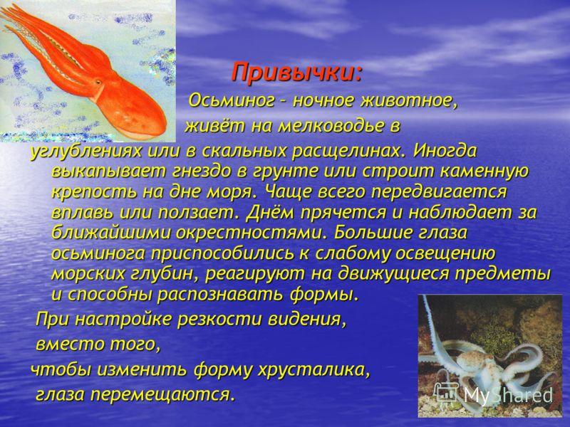 Привычки: Осьминог – ночное животное, Осьминог – ночное животное, живёт на мелководье в живёт на мелководье в углублениях или в скальных расщелинах. Иногда выкапывает гнездо в грунте или строит каменную крепость на дне моря. Чаще всего передвигается