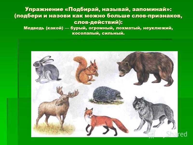 Упражнение «Подбирай, называй, запоминай»: (подбери и назови как можно больше слов-признаков, слов-действий): Медведь (какой) бурый, огромный, лохматый, неуклюжий, косолапый, сильный.