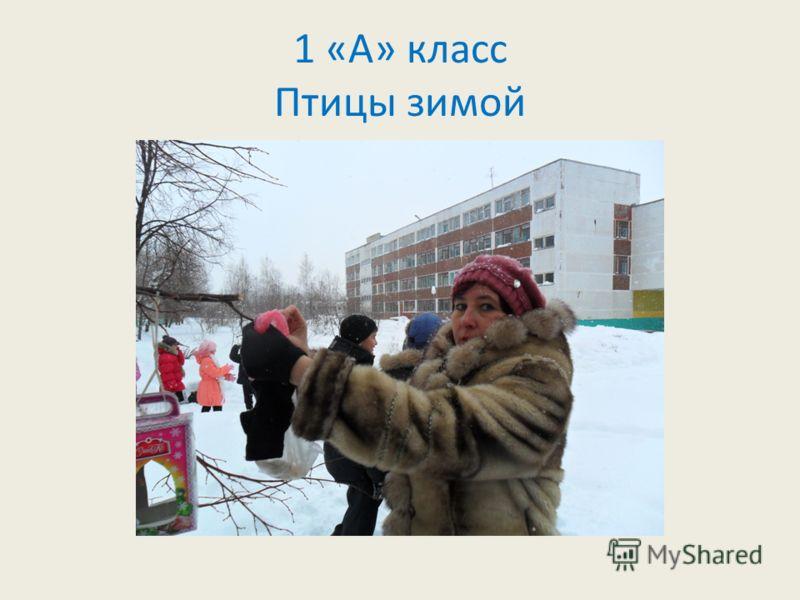 1 «А» класс Птицы зимой