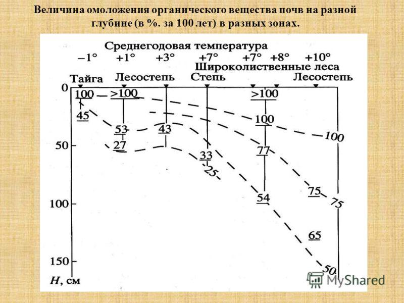 Рис. 1. Величина омоложения органического вещества почв на разной глубине (в %. за 100 лет) в разных зонах.