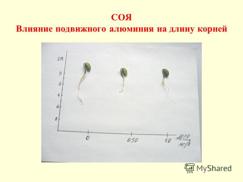 СОЯ Влияние подвижного алюминия на длину корней