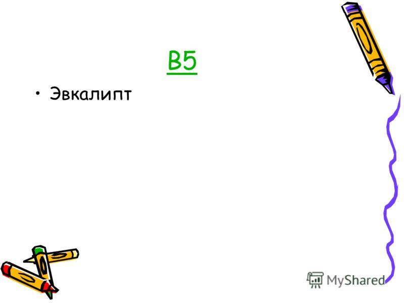 В5 Эвкалипт