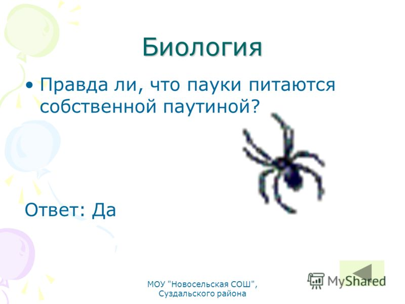 Биология Правда ли, что пауки питаются собственной паутиной? Ответ: Да МОУ Новосельская СОШ, Суздальского района