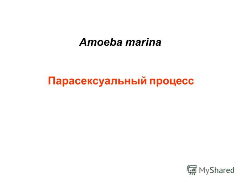 Amoeba marina Парасексуальный процесс
