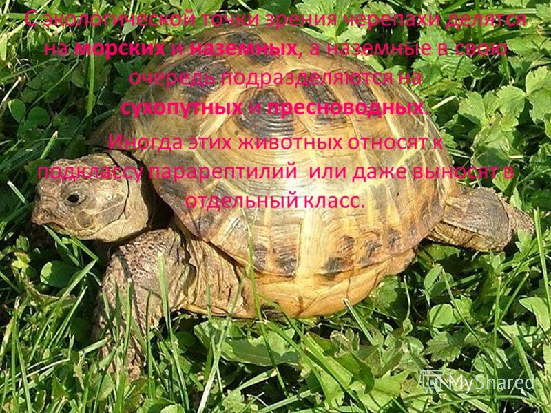 С экологической точки зрения черепахи делятся на морских и наземных, а наземные в свою очередь подразделяются на сухопутных и пресноводных. Иногда этих животных относят к подклассу парарептилий или даже выносят в отдельный класс.