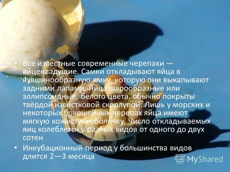 Все известные современные черепахи яйцекладущие. Самки откладывают яйца в кувшинообразную ямку, которую они выкапывают задними лапами. Яйца шарообразные или эллипсоидные, белого цвета, обычно покрыты твёрдой известковой скорлупой. Лишь у морских и не