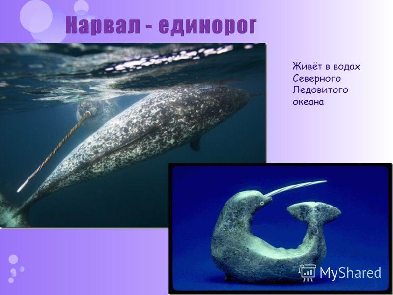 Живёт в водах Северного Ледовитого океана