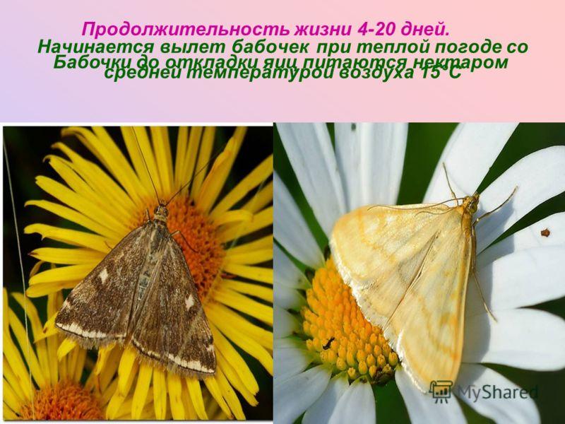 Начинается вылет бабочек при теплой погоде со средней температурой воздуха 15°С Продолжительность жизни 4-20 дней. Бабочки до откладки яиц питаются нектаром