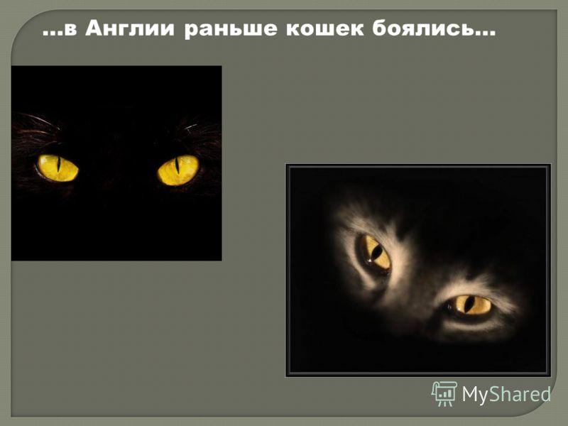 …в Англии раньше кошек боялись…