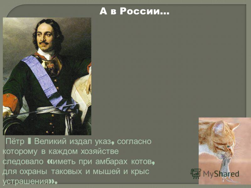 А в России… Пётр I Великий издал указ, согласно которому в каждом хозяйстве следовало « иметь при амбарах котов, для охраны таковых и мышей и крыс устрашения ».