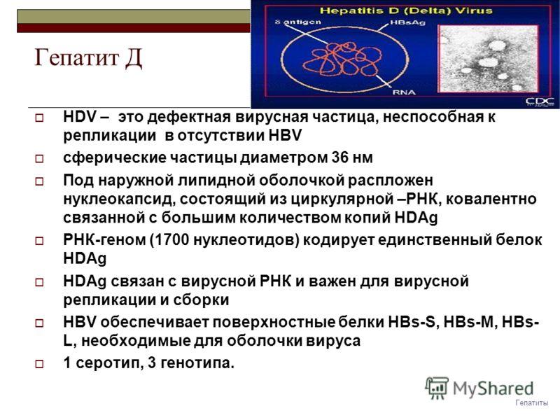 Гепатит Д HDV – это дефектная вирусная частица, неспособная к репликации в отсутствии HBV сферические частицы диаметром 36 нм Под наружной липидной оболочкой распложен нуклеокапсид, состоящий из циркулярной –РНК, ковалентно связанной с большим количе