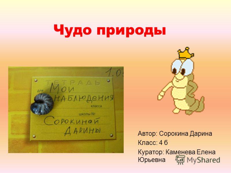 Чудо природы Автор: Сорокина Дарина Класс: 4 б Куратор: Каменева Елена Юрьевна
