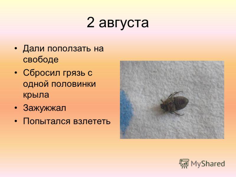 2 августа Дали поползать на свободе Сбросил грязь с одной половинки крыла Зажужжал Попытался взлететь