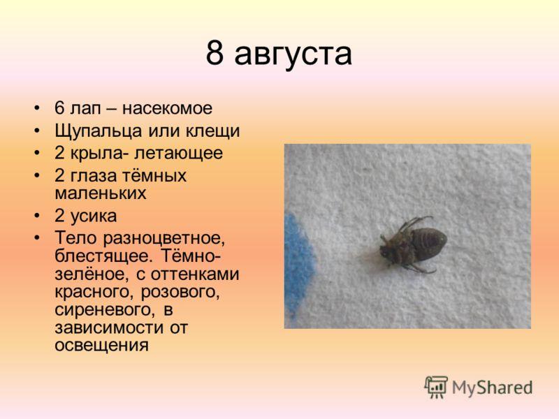 8 августа 6 лап – насекомое Щупальца или клещи 2 крыла- летающее 2 глаза тёмных маленьких 2 усика Тело разноцветное, блестящее. Тёмно- зелёное, с оттенками красного, розового, сиреневого, в зависимости от освещения