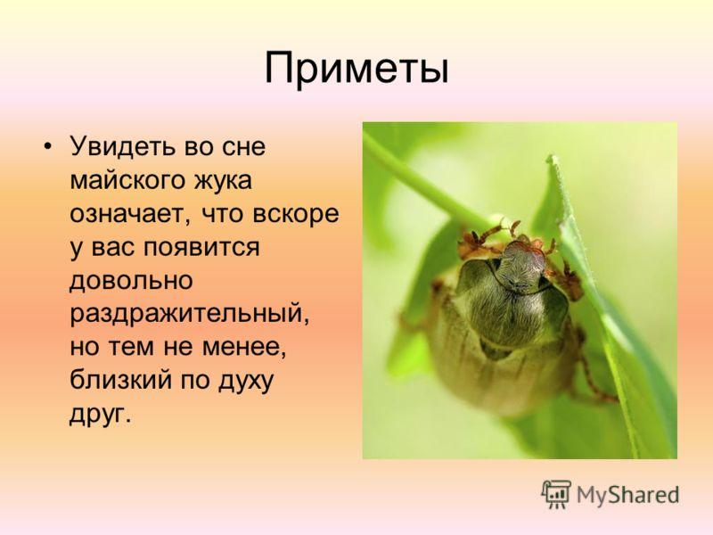 Приметы Увидеть во сне майского жука означает, что вскоре у вас появится довольно раздражительный, но тем не менее, близкий по духу друг.