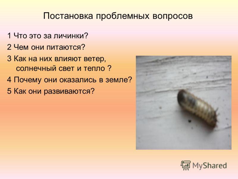 Постановка проблемных вопросов 1 Что это за личинки? 2 Чем они питаются? 3 Как на них влияют ветер, солнечный свет и тепло ? 4 Почему они оказались в земле? 5 Как они развиваются?