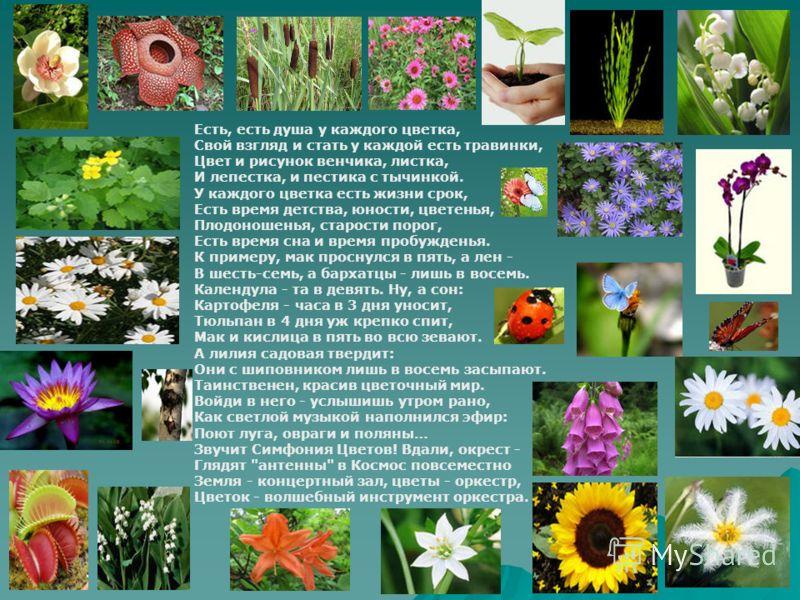 Есть, есть душа у каждого цветка, Свой взгляд и стать у каждой есть травинки, Цвет и рисунок венчика, листка, И лепестка, и пестика с тычинкой. У каждого цветка есть жизни срок, Есть время детства, юности, цветенья, Плодоношенья, старости порог, Есть