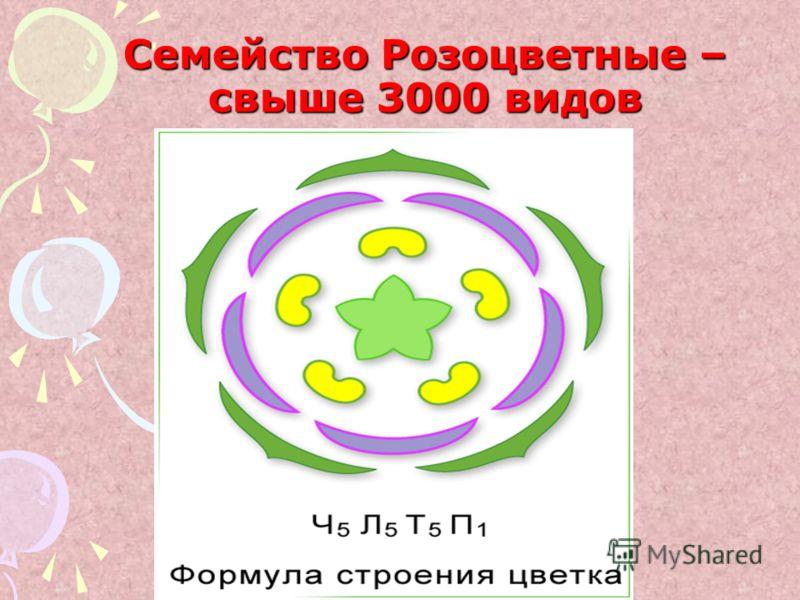 Семейство Розоцветные – свыше 3000 видов
