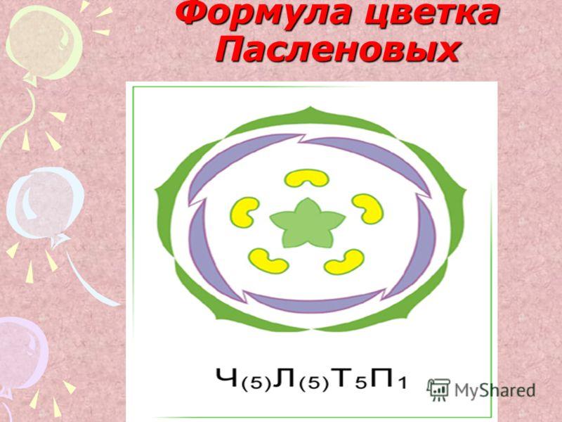 Формула цветка Пасленовых