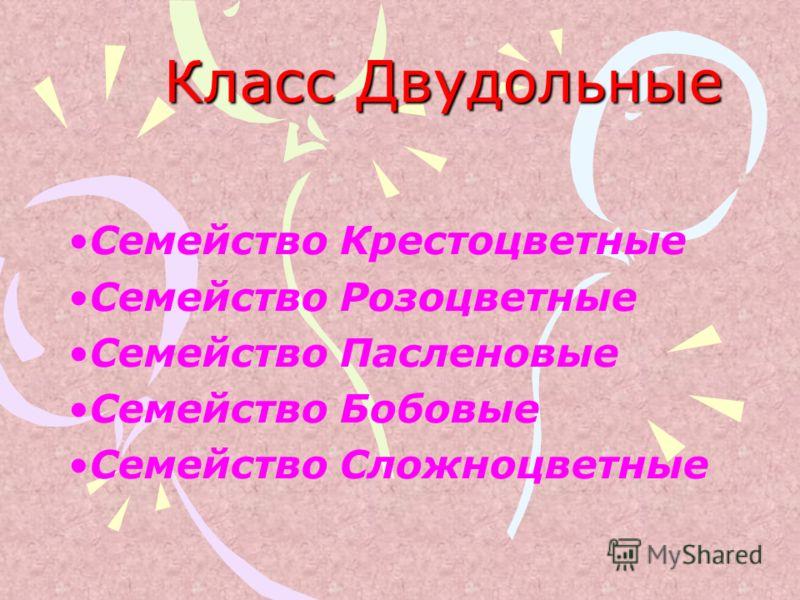 Класс Двудольные Семейство Крестоцветные Семейство Розоцветные Семейство Пасленовые Семейство Бобовые Семейство Сложноцветные