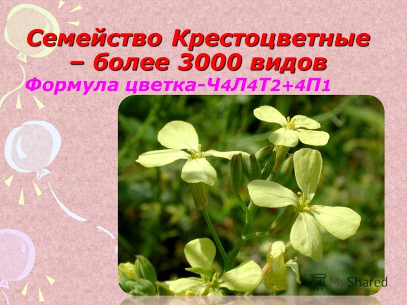 Семейство Крестоцветные – более 3000 видов Формула цветка-Ч 4 Л 4 Т 2+4 П 1